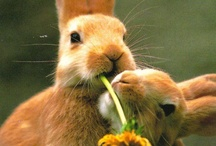 Bunnies / by Susan Pletscher