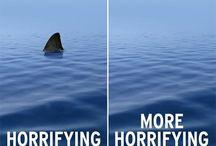 sharkweeksharkweek