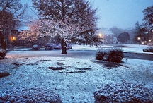 First Snow, Fall 2012 / by Boston College