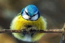 BIRDS / by Donna Browning-Damm