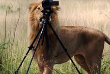 Lens + Tripod / Capture the beauty of the world artistically  / by Kim Archer