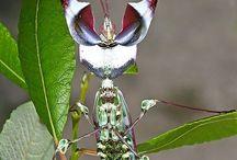 Insectos y arácnidos