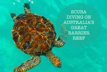 // The Great Barrier Reef / Photographs from the amazing and diverse Great Barrier Reef