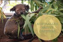 // Australia's Native Critters / Being so big and so isolated Australian animals have evolved in to something a little bit...different, shall we say, to creatures in other places around the world!
