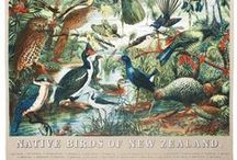 Tea Towels from New Zealand / A collection of the coolest quirkiest Tea Towels from New Zealand Aotearoa