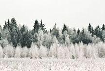 Zimní krajina / Winter Wonderland