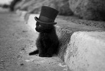 kitties !!!