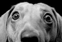 ♥ kutyák ♥ dogs ♥