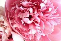 ♥  virágok  ♥  flowers