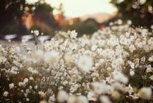 Flowers / Blomster