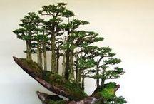 Pl : Bonsai / Potted plants