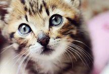 An : Cats 4/8 Kittens 1