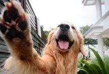 An : Dogs1/2
