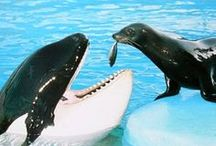 An : Whales / Other Aquatic animals...