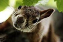 An : Squirrels