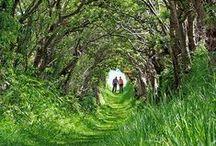 Ro : Path / Walkways / Tree Tunnels