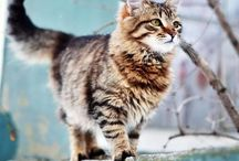 An : Cats 2/8 : Beauty