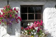 Ho : Vertical garden 2 / Floral windows, fence & walls