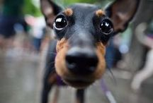 Fotografieren - Inspiration - Tiere - Hunde