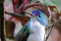 Bi : Hummingbirds / by Mondayasu