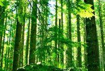 Pl : Trees 1