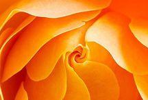 Fl : Roses