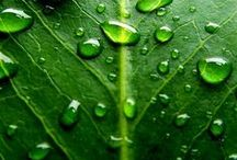 Pl : Leaves / Glasses