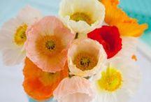 Fl : Poppies 1