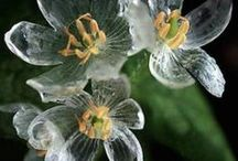 Fl : White flowers