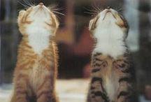 An : Cats 1/8