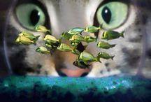 An : Cats 3/8 Close-up