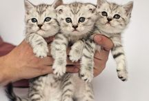 An : Cats 5/8 Kittens 2