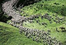 Ci : New Zealand