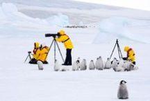 Ci : Antarctica