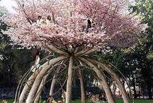 """Amazing Trees ((""""""""?""""),,,_"""