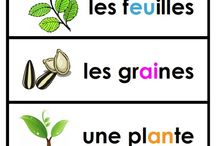 K-2 Science: French Immersion / Resources and activities for teaching K-2 science in French.