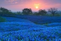 Travel - Texas