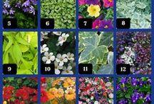 gardening / by Theresa Blasky-Wheat