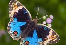 Beautiful Butterflies ♥