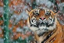 Wild ~ Cats
