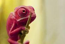 Wild ~ Reptiles