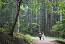 woodland wedding / Patrizia and Romolo wedding in the forest! 5 july 2014
