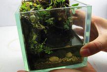 Paludarium - Vivarium - Aquascaping