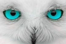 Animals (guides, totems,art, craft, tutorials etc) / animals: wisdom, guides, totems,art, craft, tutorials etc magnificent or just cute;)