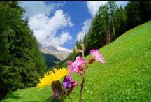 Cortina Spring