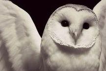 Best owls ♥