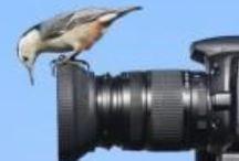 Nice pics! / Tips hoe je aan goed beeldmateriaal voor je website komt.