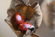 Ladybugs / Mariquitas, Ladybugs, cochinillas