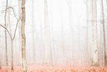 efterår / Autumn