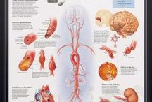 Dr Mustapha Tahir: Medicine. / Fascinating Medical Facts and Images Compiled By Dr Mustapha Tahir